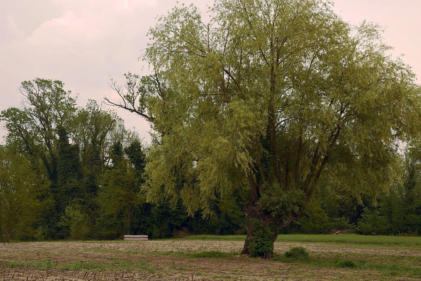 Amianto al parco dello Scrivia