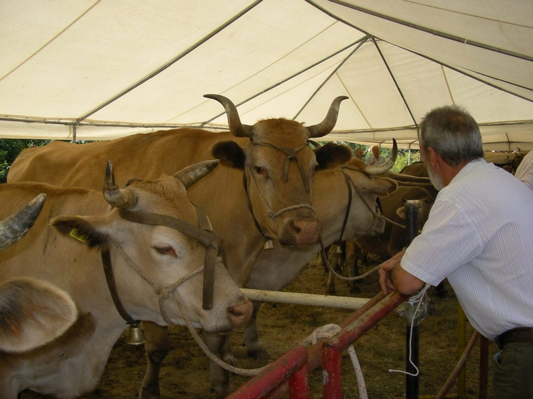 Un'immagine dell'Antica fiera del bestiame di Capanne di Marcarolo
